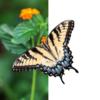 Photopea 写真素材の切り抜き 蝶