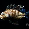 魚の写真をPhotopeaでタイルアート風に加工してみた。