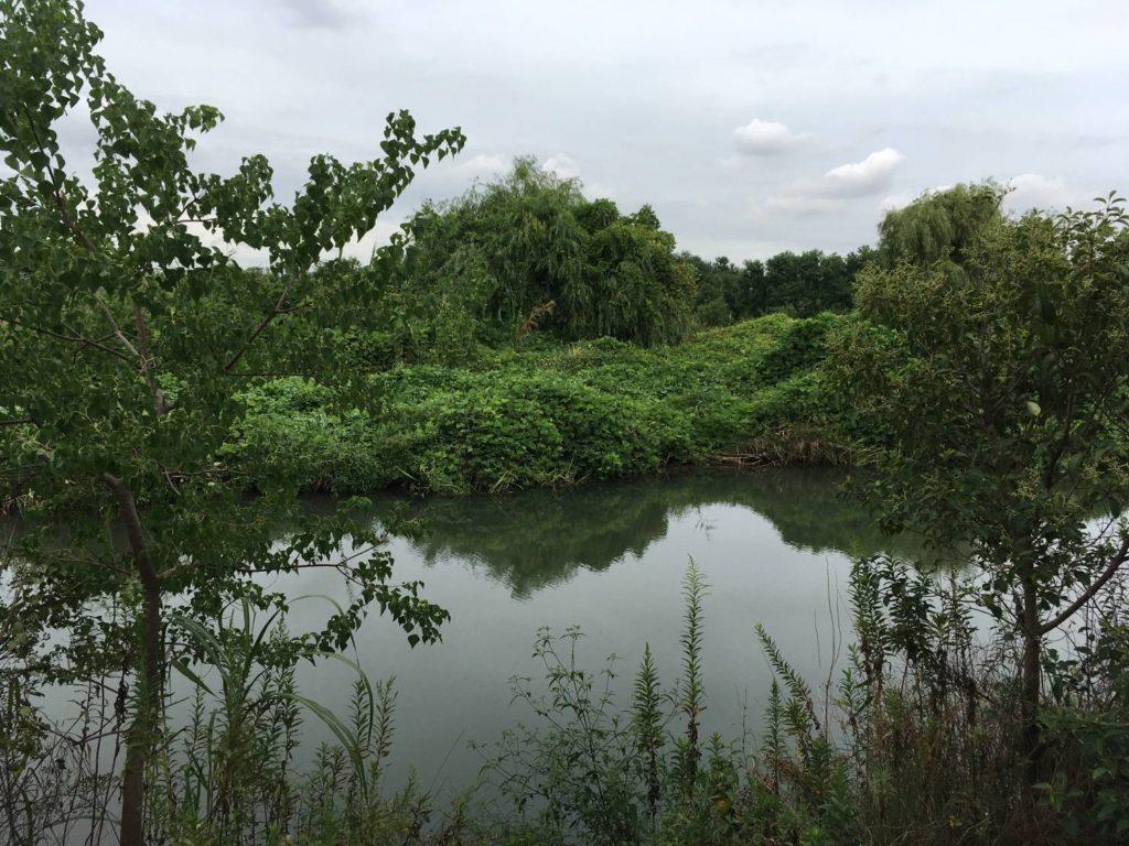 淀川の城北ワンド付近