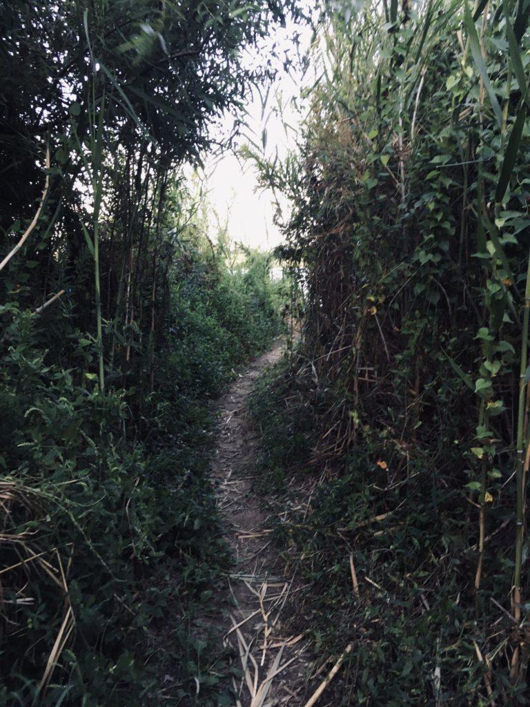 淀川のワンドの草むらの道