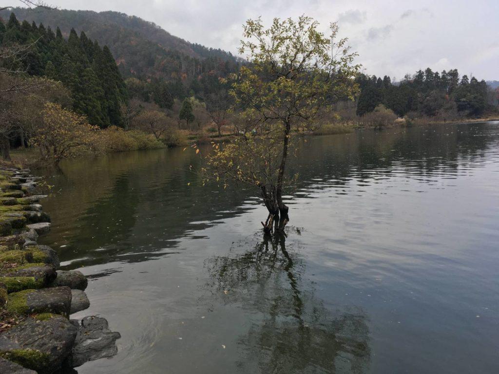 余呉湖南の岸辺と湖の木