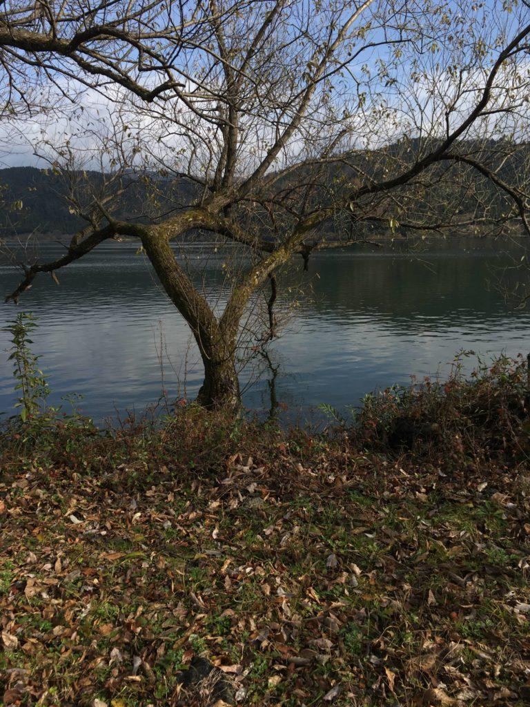 余呉湖南西の岸辺と立木